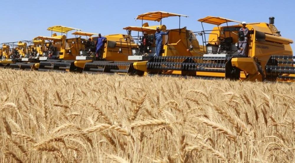"""إنتاج القمح في سوريا في """"أدنى مستوياته"""" منذ 29 عام"""