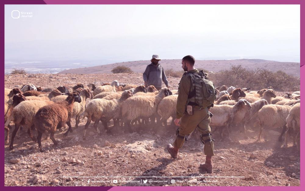 الاحتلال الإسرائيلي متهم بسرقة الماعز اللبناني