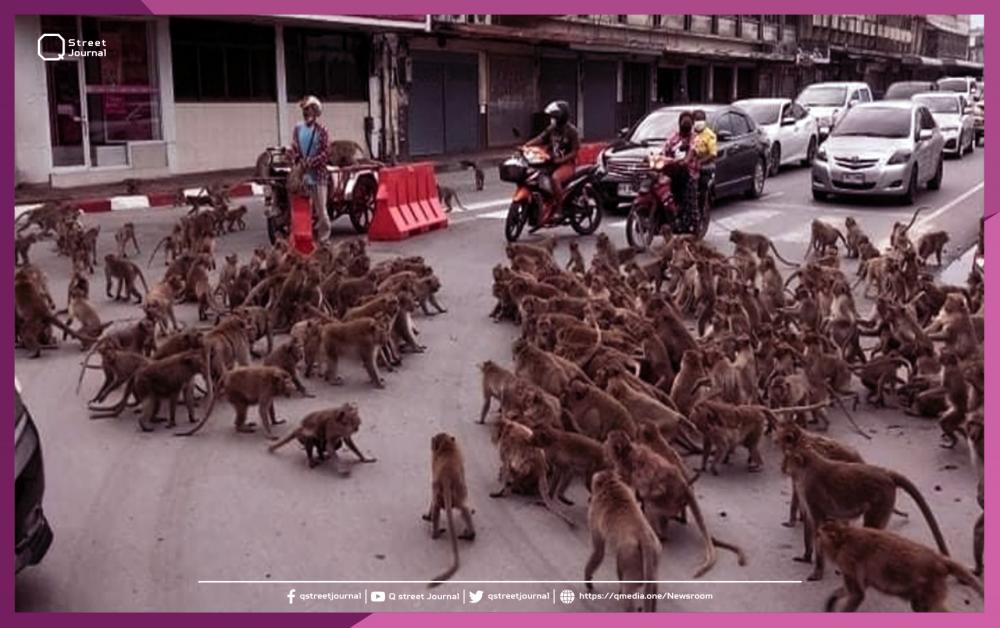 بالفيديو.. القردة تتمرد في «تايلاند»!