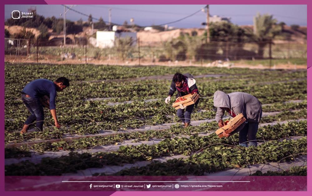 كم بلغت صادرات «دمشق» الزراعية.. ؟!