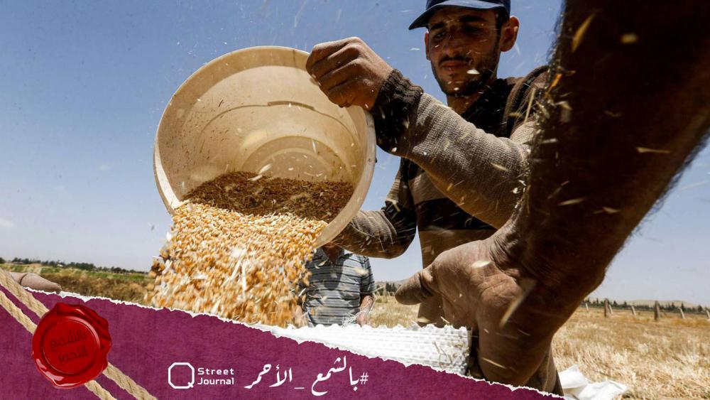 سوريا.. عام القمح في خطر