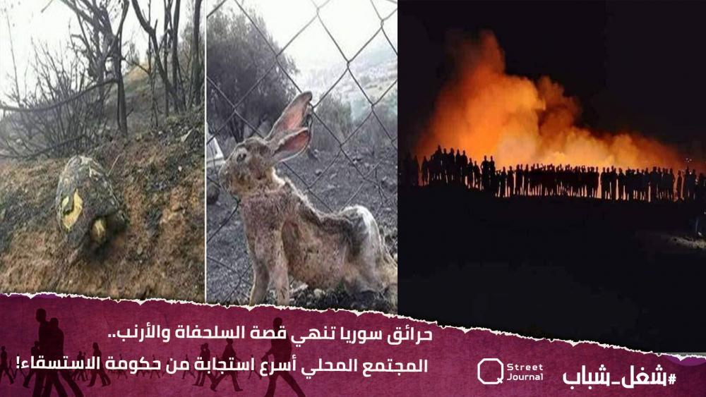 حرائق سوريا تنهي قصة السلحفاة والأرنب.. المجتمع المحلي أسرع استجابة من حكومة الاستسقاء!