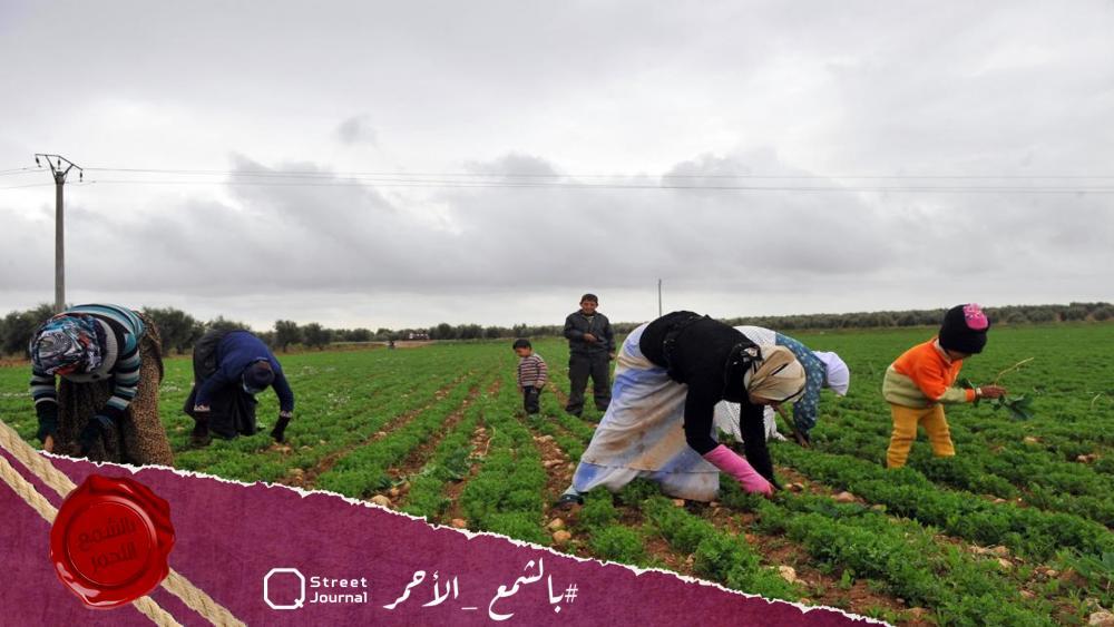 تدهور «الزراعة» في ريف حماة.. فلاحون يتلفون محاصيلهم وشركات تحتكر «الأسمدة والبذور»