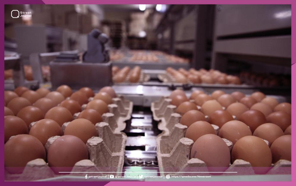 البيض يحلق.. لجنة المربين تلقي اللوم على «التموين»